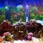 29 gallons reef tank (mostly live coral and fish) - New image shortly, Very old pic.