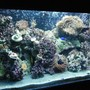 50 gallons reef tank (mostly live coral and fish) - New updated pic of my reef!
