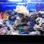60 gallons reef tank (mostly live coral and fish) - My saample photos for 2ft tank..4ft tank coming soon...