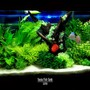 60 gallons reef tank (mostly live coral and fish) - my fish tank