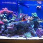 72 gallons reef tank (mostly live coral and fish) - Reef Tank