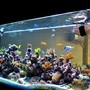200 gallons reef tank (mostly live coral and fish) - 3D Akil's Reef Tank (you can see it on YouTube)