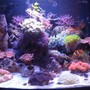 29 gallons reef tank (mostly live coral and fish) - Full tank shot