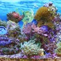 29 gallons reef tank (mostly live coral and fish) - I wanted to feel I was right there in my tank. Some of my dreams start off right here. I will have the most fantastic dream sometimes. A Mermaid appears...Oh Ya..