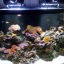 140 gallons reef tank (mostly live coral and fish) - Reef Aquarium by Sunset Aquatics (Tempe, AZ, USA)