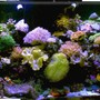 120 gallons reef tank (mostly live coral and fish) - new tank setup 150 gal