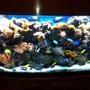 200 gallons reef tank (mostly live coral and fish)