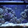 30 gallons reef tank (mostly live coral and fish) - Reef after re-rockworking