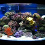 46 gallons reef tank (mostly live coral and fish) - 46 bow front