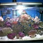 55 gallons reef tank (mostly live coral and fish) - Reef Tank 29 gallon