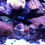 65 gallons reef tank (mostly live coral and fish) - Tank