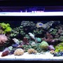 45 gallons reef tank (mostly live coral and fish) - front shot of aquarium