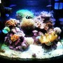 30 gallons reef tank (mostly live coral and fish) - Full tank view