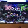 30 gallons reef tank (mostly live coral and fish) - This is a full tank shot of my 30 gallon reef tank