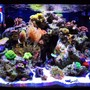 40 gallons reef tank (mostly live coral and fish) - My 29 Gallon Biocube with Ecotech Radion lighting
