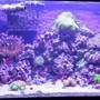 29 gallons reef tank (mostly live coral and fish) - Reef tank