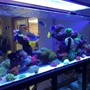400 gallons reef tank (mostly live coral and fish) - 400g mixed reef
