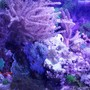 8 gallons reef tank (mostly live coral and fish) - Low budget nano reef tank
