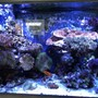 65 gallons reef tank (mostly live coral and fish) - 65 Gallon Mixed Reef Tank