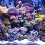 20 gallons reef tank (mostly live coral and fish) - 20 Gallon H