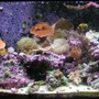 125 gallons reef tank (mostly live coral and fish) - my 125
