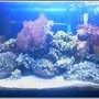 20 gallons reef tank (mostly live coral and fish) - 20 gallon been set up for a year