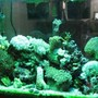 29 gallons reef tank (mostly live coral and fish) - tank