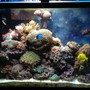 50 gallons reef tank (mostly live coral and fish) - my main tank
