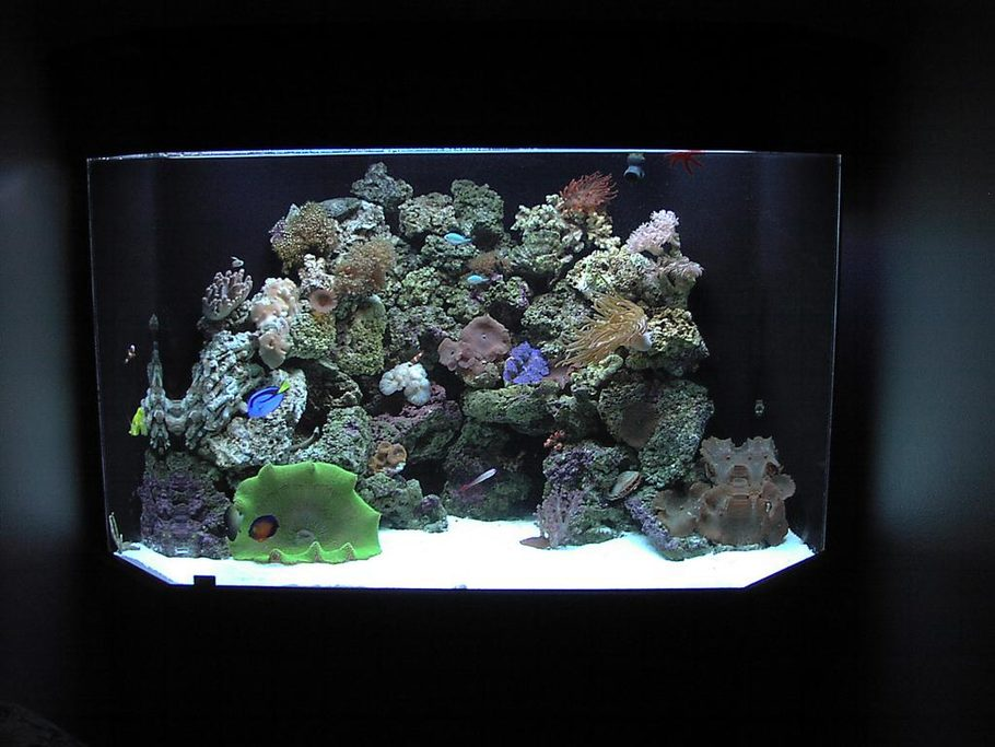Jeresc5000 39 s reef tanks details and photos photo 1467 for Pentagon fish tank