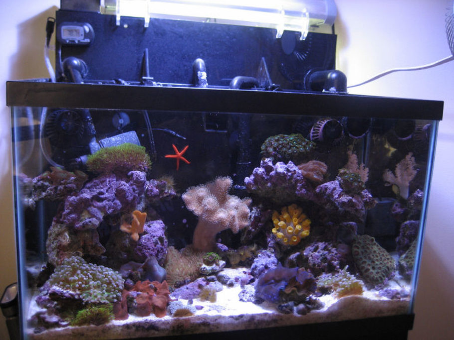Dick headers 39 s reef tanks photo id 21728 full version for Saltwater fish for 10 gallon tank
