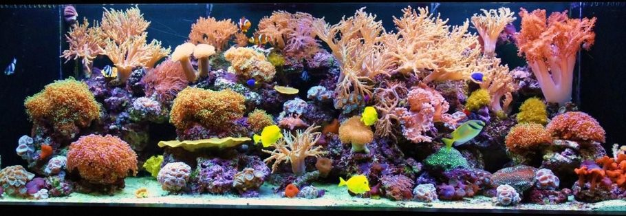 Most beautiful reef tanks all time for 200 gallon fish tank dimensions