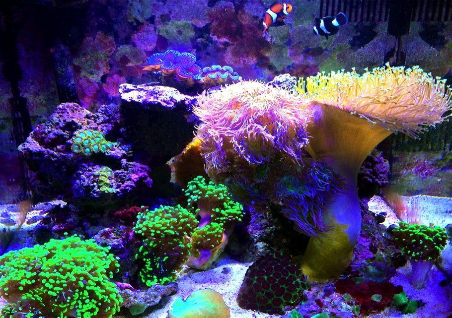 Most Beautiful Reef Tanks 2014 Ratemyfishtank Com