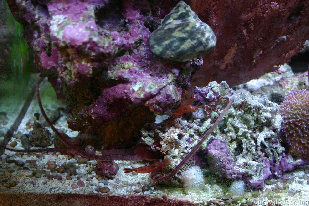 corals inverts stocking in 34 gallons tank - more pics