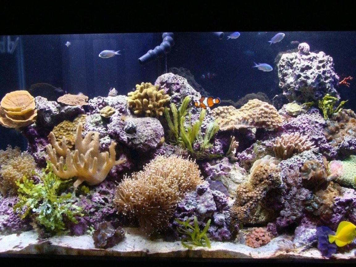 corals inverts stocking in 90 gallons tank - my reef tank