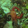 corals inverts - ruby crab - 120 reef tank 2 400 20,000K 6 55 blue PC Tide pool 2 tons of fish and coral and inverts