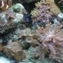 corals inverts stocking in 46 gallons tank - Corals and shrooms