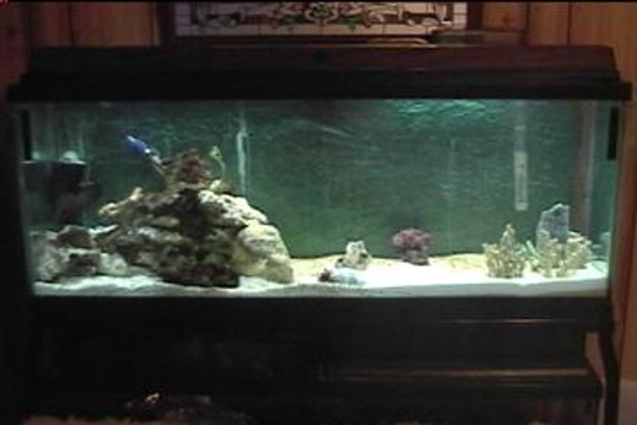 saltwater fish tank (mostly fish, little/no live coral) - i am new at saltwater tanks and any advice is appreciated. thanks.