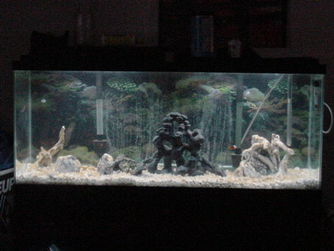 55 gallons saltwater fish tank (mostly fish, little/no live coral)