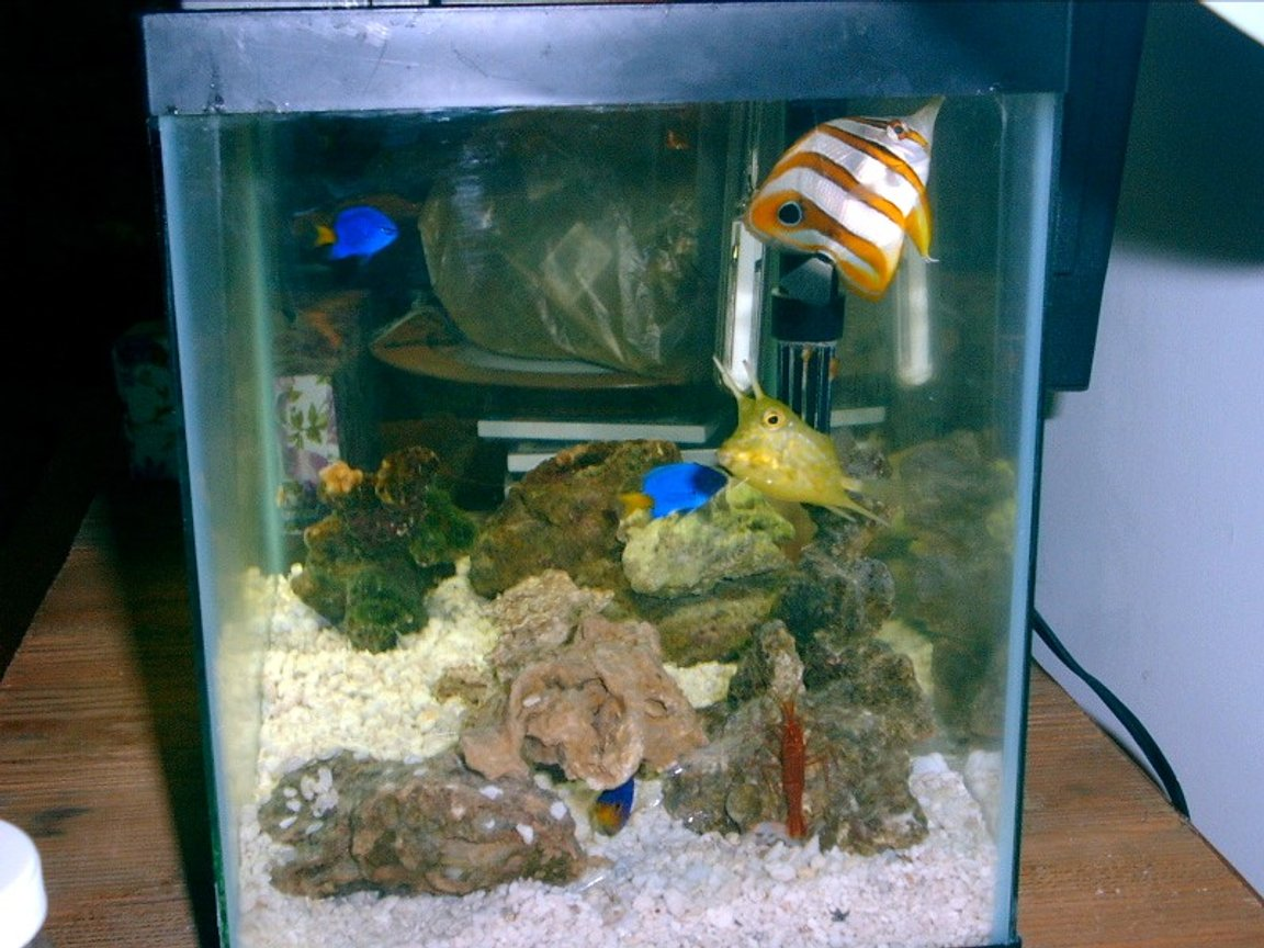 saltwater fish tank (mostly fish, little/no live coral) - Cool Tank