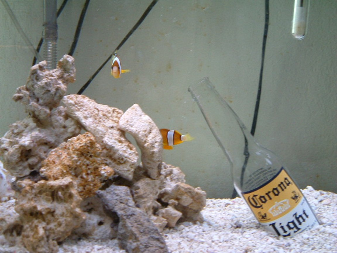 saltwater fish tank (mostly fish, little/no live coral) - I love aquariums, especially salt-water. I have loved them since I was a child. I also sell many aquarium (salt and fresh) items at discount prices. Email me for more info.