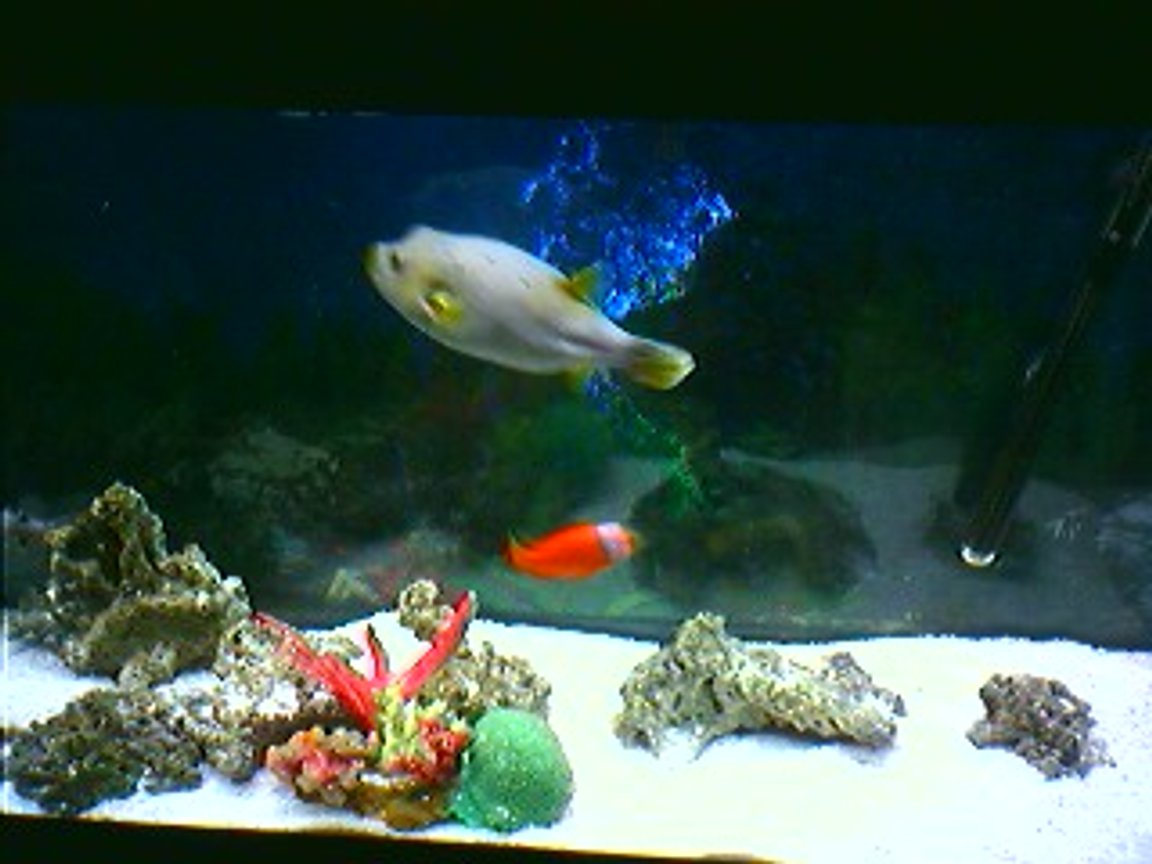 saltwater fish tank (mostly fish, little/no live coral) - 55 Gal Fish only Tank