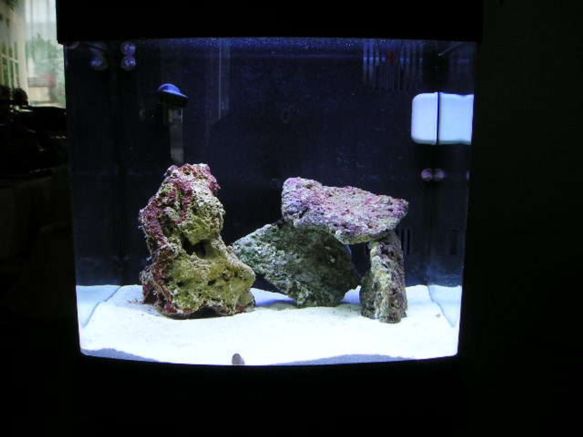 14 gallons saltwater fish tank (mostly fish, little/no live coral) - FTS