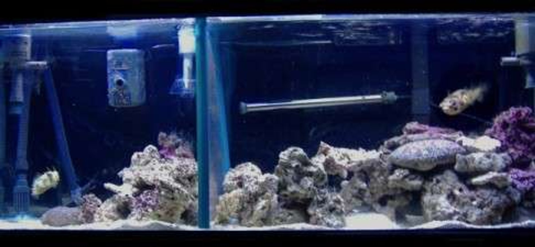 55 gallons saltwater fish tank (mostly fish, little/no live coral) - 55g puffers