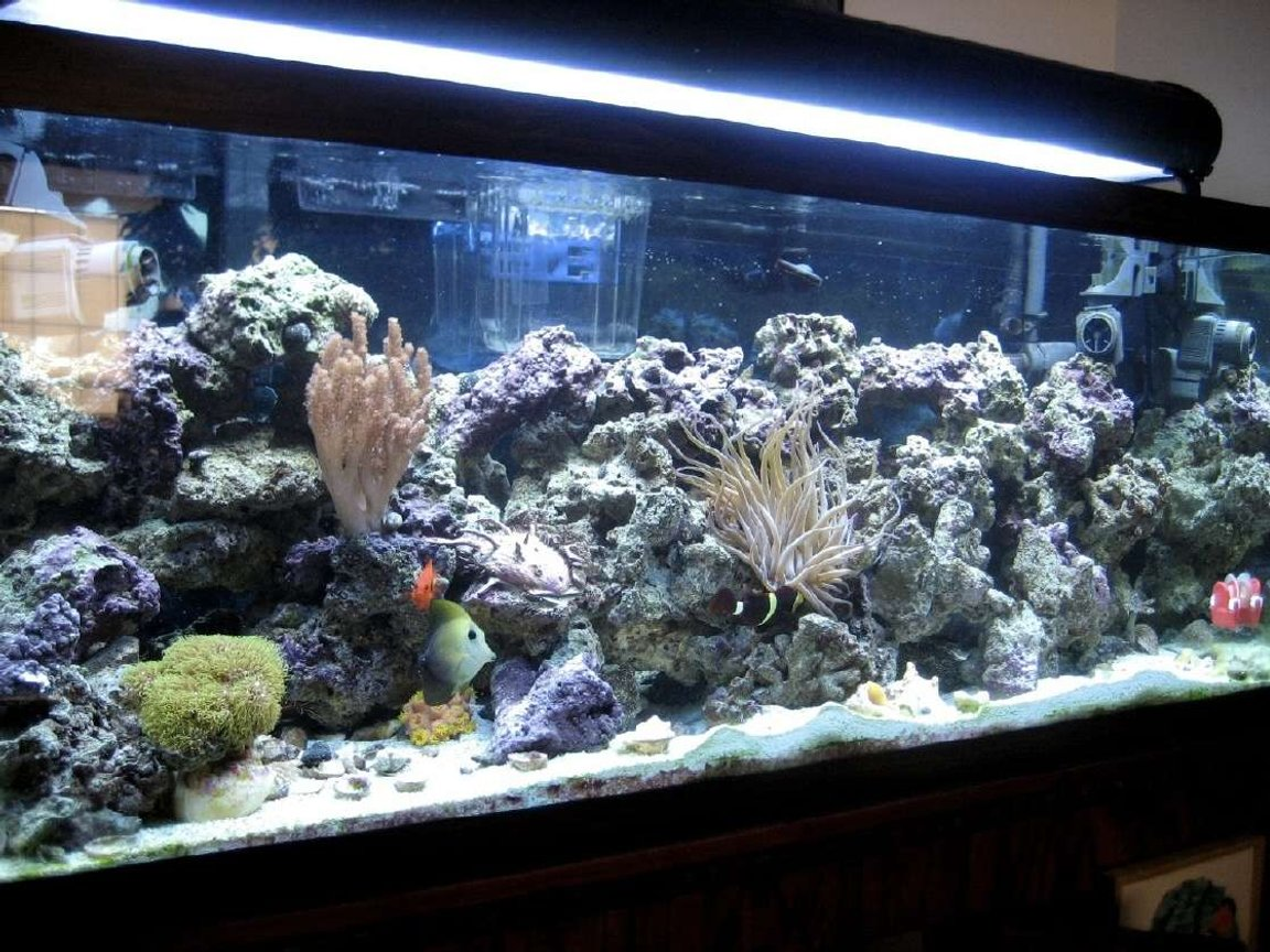 75 gallons saltwater fish tank (mostly fish, little/no live coral) - I love this hobby.