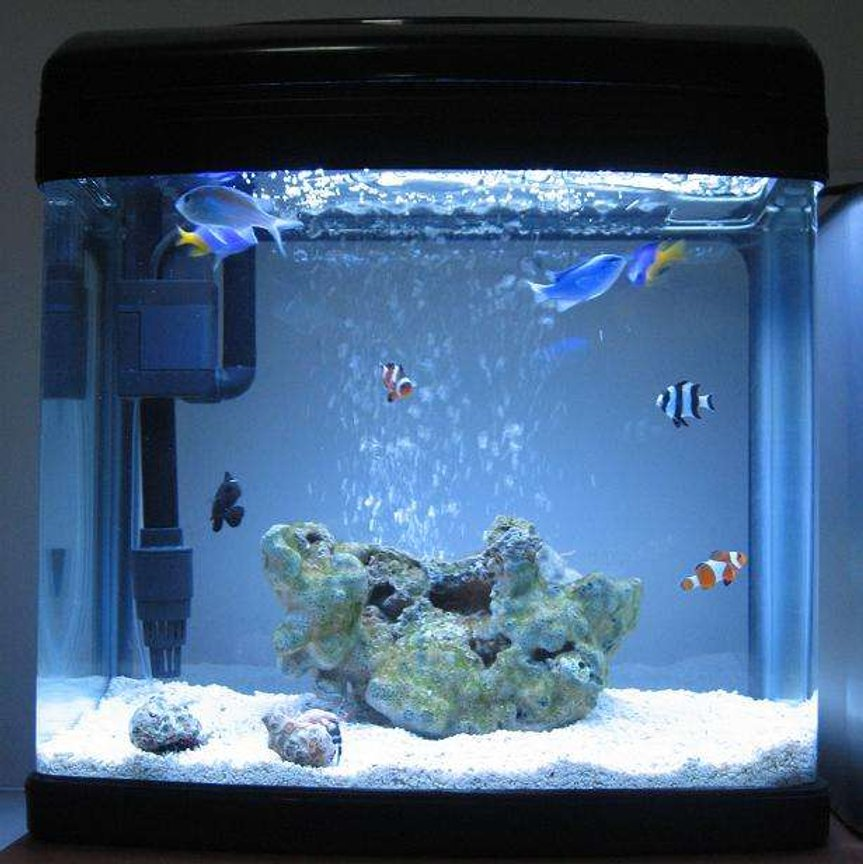 4 gallons saltwater fish tank (mostly fish, little/no live coral) - 1 DAY OLD My 16 litre (4 gallon) reef tank : )