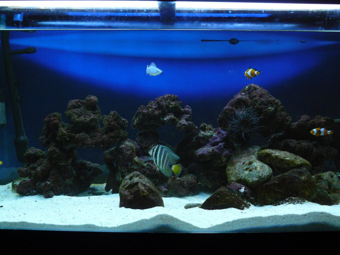 60 gallons saltwater fish tank (mostly fish, little/no live coral) - my tank