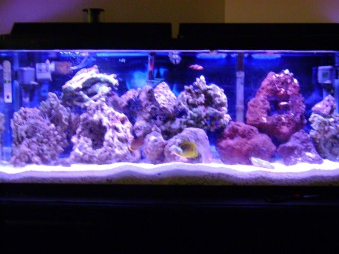 55 gallons saltwater fish tank (mostly fish, little/no live coral) - 55 gallon saltwater