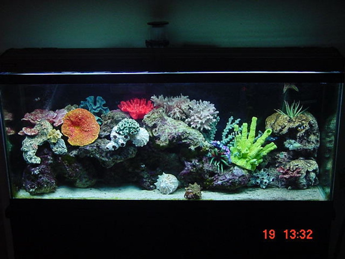 55 gallons saltwater fish tank (mostly fish, little/no live coral) - 55 gallon marine tank with 85 pounds of cured live figi rock!