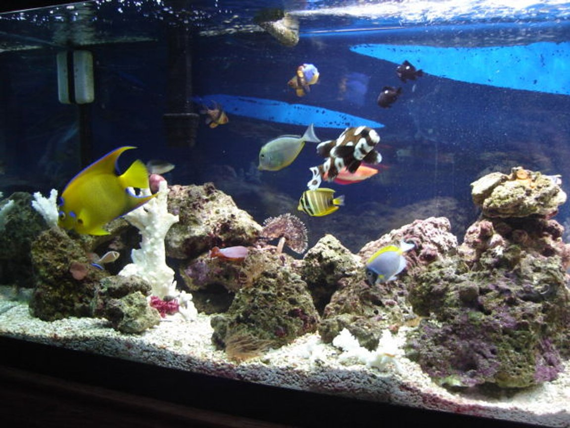90 gallons saltwater fish tank (mostly fish, little/no live coral) - another pic with more fish trying to get all fish in one shot what a pain!