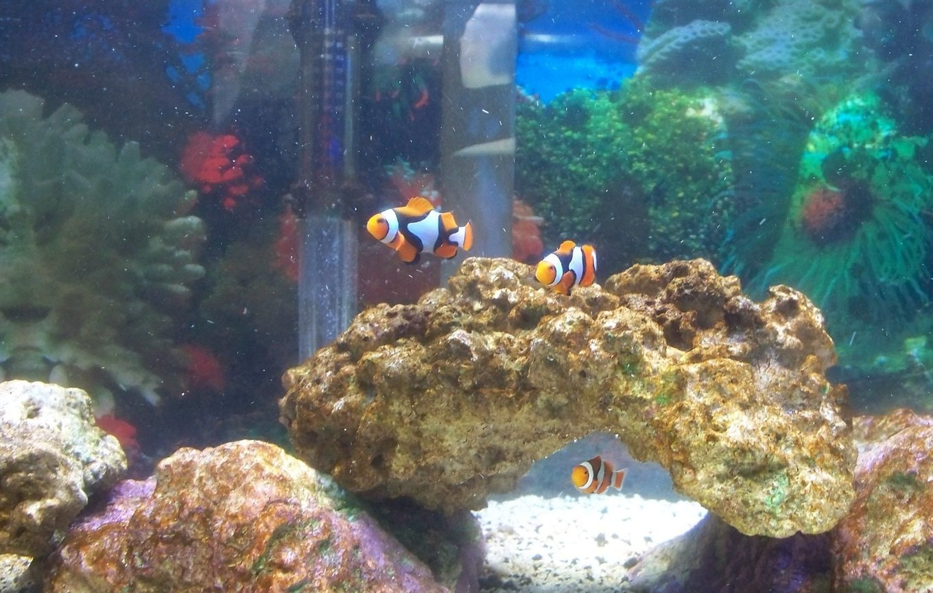 20 gallons saltwater fish tank (mostly fish, little/no live coral) - Hide and go seek !!!